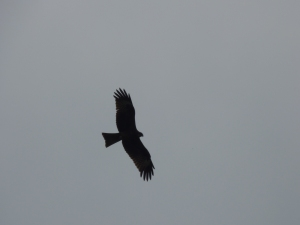 These sea eagles (I think) were everywhere. This one was on Monkey Island but we did see one do a dive on something in Cat Ba town also