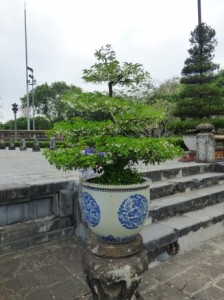 Large Bonsai, Imperial City