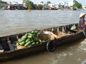 Floating Market-Mangos