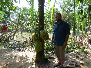 Gav as a unit of measurement-some varieties of Jackfruit get pretty big
