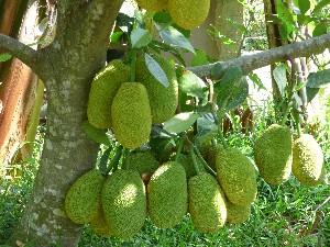 Mmmm, Jackfruit.
