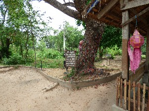 Mass grave of more than 100 victims. This grave contained women and children, most of whom were buried naked. The tree in the centre was used by the Khmer Rouge to execute the children by cracking their skulls on the tree in front of their mothers and tossed into the pit.