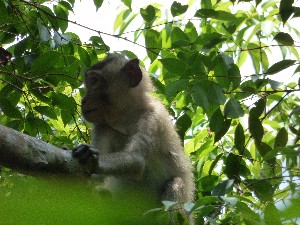 Monkey being quite shy