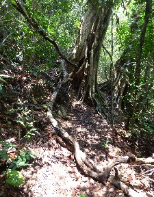 Arch tree- look closer...