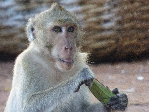 Gav made the mistake of kicking over a banana he found- he chased us a bit after looking for more.