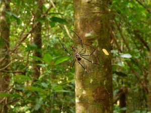 Spider from the back- the following day we saw it from the front..