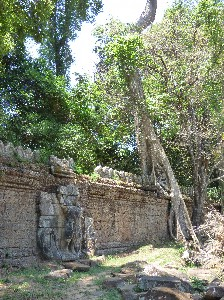 Preah Khan- Fig on exterior wall (by moat)