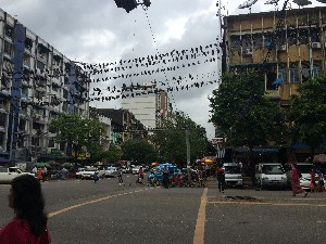 Birds on a wire..a lady here sells seeds to feed the pigeons for merit. They do not need feeding...