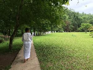 Morning Walking meditation around the garden.