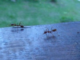 Ants...