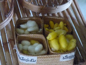 Cocoons from different areas in Laos