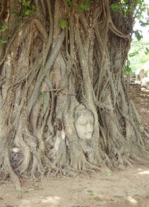 The big draw at Wat Mahathat, a Buddha head trapped in tree roots.