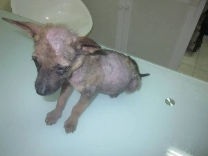 Peanut when he was rescued