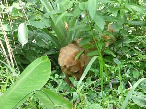 Max hunting