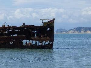 A shipwreck at Motueka.